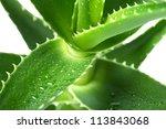 Macro Of Flower Aloe
