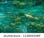 monet's pond in japan  emerald...   Shutterstock . vector #1138442489