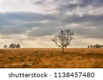 solitaire tree in the fields... | Shutterstock . vector #1138457480