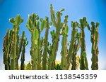 High Cactus Tree In Sonoran...