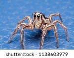 Jumping spiders is a group of...