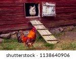 beautiful grown healthy rooster ... | Shutterstock . vector #1138640906