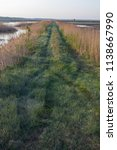 Beautiful Green Marsh Grass An...