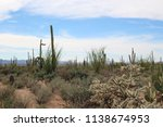 Small photo of Desert landscape filled with ocotillo, creosote bushes, saguaro, prickly pear and cholla cacti on the Desert Discovery Nature Trail in Saguaro National Park, Tuscon Mountain District, Arizona, USA