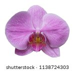 orchid isolated on white... | Shutterstock . vector #1138724303