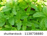 top view of bright spearmint... | Shutterstock . vector #1138738880