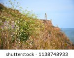 wildflowers on high coast by... | Shutterstock . vector #1138748933