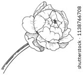 peony flower in a vector style... | Shutterstock .eps vector #1138766708