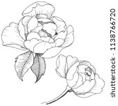 peony flower in a vector style... | Shutterstock .eps vector #1138766720