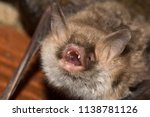 escalera s bat  miotys... | Shutterstock . vector #1138781126