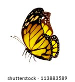 Stock photo yellow butterfly isolated on white 113883589