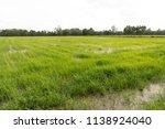 landscape of green organic...   Shutterstock . vector #1138924040