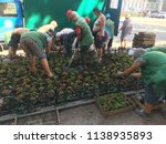 workers of the planting of... | Shutterstock . vector #1138935893