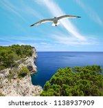seagull over cliffs in... | Shutterstock . vector #1138937909