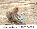 a monkey playing with a... | Shutterstock . vector #1138964039