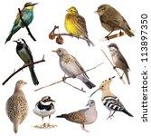 set birds isolated on white... | Shutterstock . vector #113897350