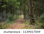 path to the forest  tree trunk... | Shutterstock . vector #1139017049