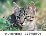Cute Cat Sits In The Grass
