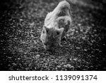street cats eating  detail of... | Shutterstock . vector #1139091374