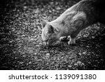 street cats eating  detail of... | Shutterstock . vector #1139091380