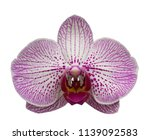 orchid isolated on white... | Shutterstock . vector #1139092583