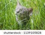 cat with a happy expression... | Shutterstock . vector #1139105828