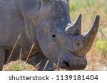 rhinos  | Shutterstock . vector #1139181404