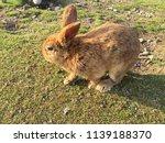 cute small rabbits | Shutterstock . vector #1139188370