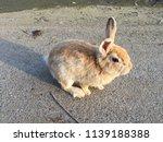 cute small rabbits | Shutterstock . vector #1139188388