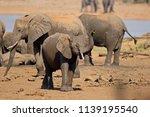african elephants  loxodonta... | Shutterstock . vector #1139195540