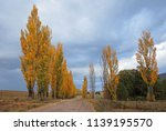rural road and colorful poplar... | Shutterstock . vector #1139195570