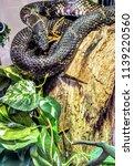 snake on a log | Shutterstock . vector #1139220560