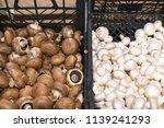 mushrooms champignons in black...   Shutterstock . vector #1139241293