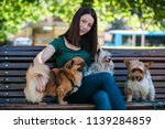 Stock photo dog walker sitting on bench and enjoying in park with dogs 1139284859