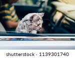 cat is a animal type mammal and ... | Shutterstock . vector #1139301740