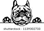 boston terrier lap dog breed... | Shutterstock .eps vector #1139302733