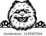 pomeranian lap dog breed face... | Shutterstock .eps vector #1139307026