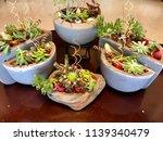 succulents in the vintage pots | Shutterstock . vector #1139340479