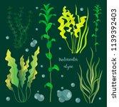 Set Of Underwater Green Sea...
