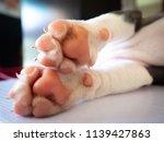 baby dog's feet | Shutterstock . vector #1139427863