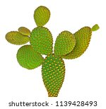 opuntia cactus isolated on... | Shutterstock . vector #1139428493
