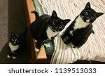 Stock photo three black cats in a row 1139513033