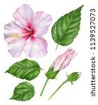 Watercolor Hibiscus. Set Of ...