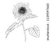 isolated drawing sunflower... | Shutterstock .eps vector #1139597660