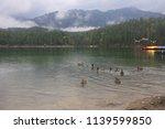 ducks on eibsee lake near the...   Shutterstock . vector #1139599850