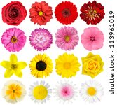 Stock photo big selection of various flowers isolated on white background red pink yellow white colors 113961019