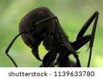 big black ants on dark...   Shutterstock . vector #1139633780