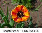 orange beautiful and bright... | Shutterstock . vector #1139656118