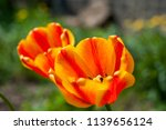 orange beautiful and bright... | Shutterstock . vector #1139656124