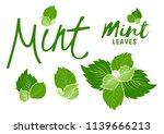 green mint. peppermint plant...   Shutterstock .eps vector #1139666213